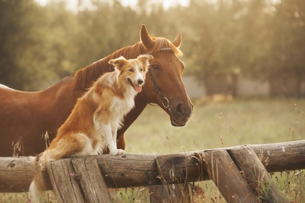 animal healing, animal lovers, pets beaconsfield, pet lovers, vets beaconsfield, equine craniosacral therapy, laser light treatment for animals, animal injuries, horse injuries, seed wellness, wellness blogs