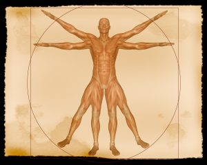 Kinesiology, Kinesiology Beaconsfield, Sport Injury, Pain Relief, Stress, Anxiety, PTSD, Seed Wellness, Craig Buchanan