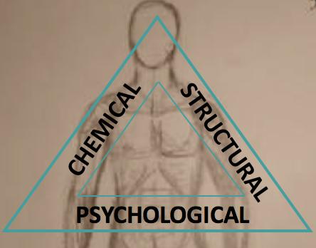 Seed Kinesiology, Craig Buchanan, Kinesiology Beaconsfield,