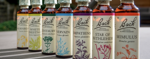 bach flower remedies, bach flower, rescue remedy, seed wellness, amber kelly,