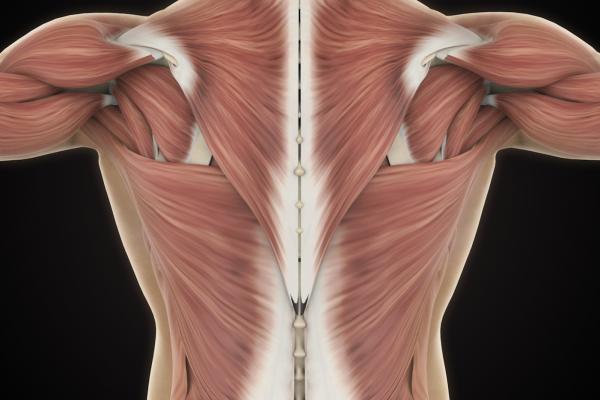 bowen therapy, bowen review, bowen beaconsfield, fascia, myofascia release, barbara zair, seed wellness, seed beaconsfield