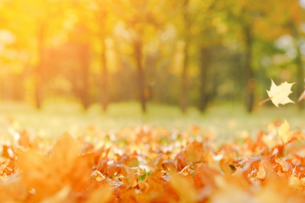 navigating into autumn, transition into autumn, Jo bishop coaching, coaching cabin, life coach beaconsfield, life coach, seed coaching, wellness, seed wellness, september kick start, healthy september,,